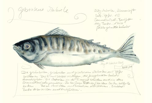 Nr.70  Gebratene Makrele - Aquarell 2013