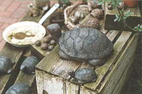 Birgitt Sokollek: Schildkröten aus Ton